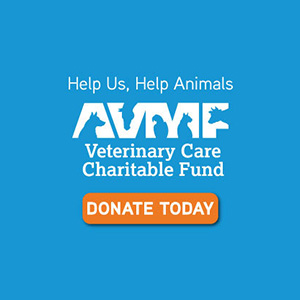 AVMF Donate Today